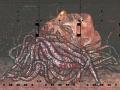 Cibermedusa