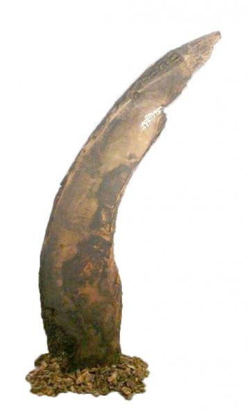 N. Angulo